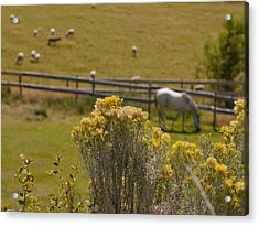 Pastures Acrylic Print