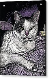 Patches The Cat Acrylic Print by Robert Goudreau