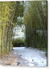 Path In Bamboo Field Acrylic Print by Renee Trenholm
