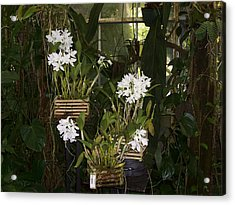 Acrylic Print featuring the photograph Patience by Sheila Silverstein