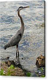 Patient Fisherman Acrylic Print