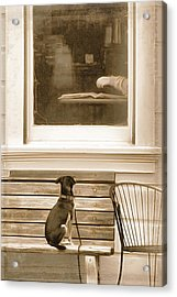 Patiently Waiting Acrylic Print by Rich Beer