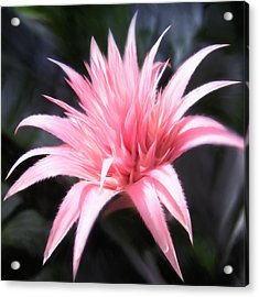 Patio Spike Acrylic Print by Marcos Porcayo