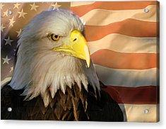 Patriotic Eagle Acrylic Print by Marty Koch