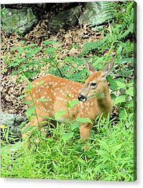 Pausing For A Snack Acrylic Print by