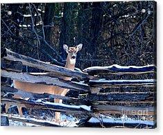 Acrylic Print featuring the photograph Pea Ridge Battlefield Deer by Nava Thompson