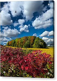 Peace Of Mind Acrylic Print by Phil Koch