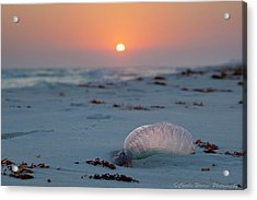 Acrylic Print featuring the photograph Peaceful Man Of War by Charles Warren