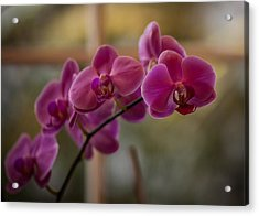 Peaceful Orchids Acrylic Print by Mike Reid