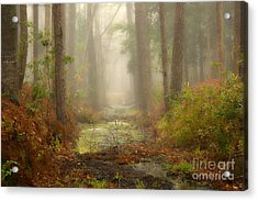 Peaceful Pathway Acrylic Print by Jill Smith
