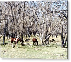 Acrylic Print featuring the photograph Peaceful Together by Clarice  Lakota