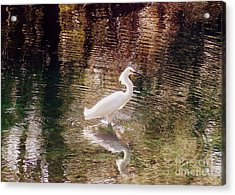 Acrylic Print featuring the photograph Peaceful Waters by Lydia Holly
