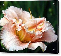 Peach Magnolia Love Affair  Acrylic Print by Penny Hunt
