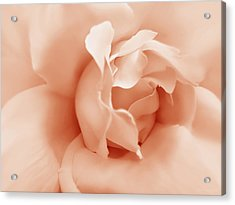 Peach Pastel Rose Flower Acrylic Print by Jennie Marie Schell