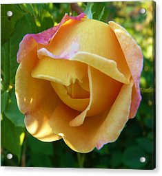 Peach Rose Acrylic Print by Jeanette Oberholtzer