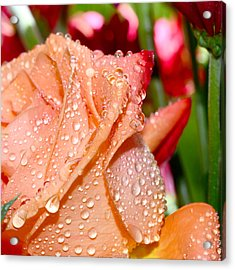 Peach Rose Acrylic Print by Michelle Armstrong
