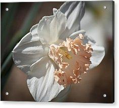 Peach Ruffle Daffodil 1 Acrylic Print by Teresa Mucha
