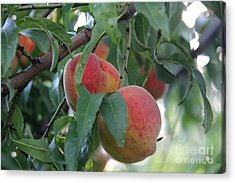 Peachy Morning Acrylic Print by Yumi Johnson