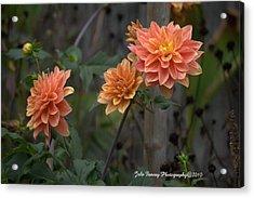 Peachy Petals Acrylic Print