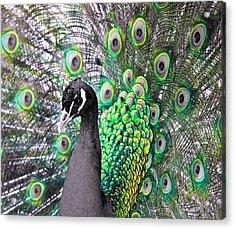 Peacock 2 Acrylic Print by Sumit Mehndiratta