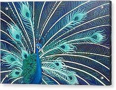 Peacock Acrylic Print by Estephy Sabin Figueroa