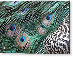 Acrylic Print featuring the photograph Peacock Feathers by Donna  Smith