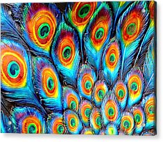 Peacock Feathers Acrylic Print by Helen Stapleton