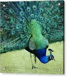 Peacock Pride Acrylic Print