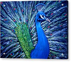 Peacocking Acrylic Print by Chris Law