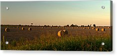 Peanut Field Bales At Dawn 1 Acrylic Print by Douglas Barnett