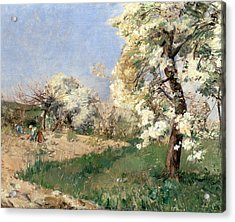 Pear Blossoms Acrylic Print by Childe Hassam