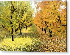 Acrylic Print featuring the photograph Pear Orchard In Fall by Katie Wing Vigil