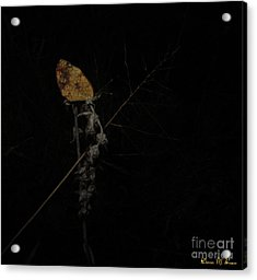 Pearly Crescentspot Butterfly Acrylic Print by Donna Brown