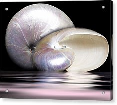 Pearly Nautilus Acrylic Print by Trudy Wilkerson