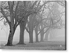 Pecan Grove Acrylic Print by Dan Wells