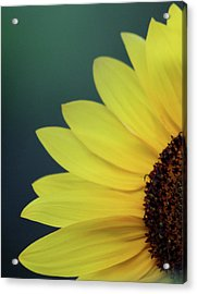 Acrylic Print featuring the photograph Pedals Of Sunshine by Cathie Douglas