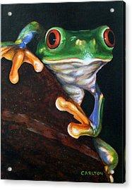 Peek-a-boo Frog Acrylic Print by Brian Carlton