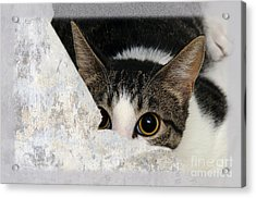 Peek A Boo I See You Too Acrylic Print