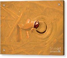 Peek A Boo Newt Acrylic Print by Nick Gustafson