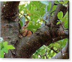 Peeking Chipmunk Acrylic Print
