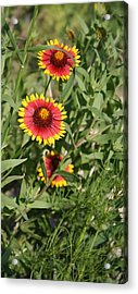 Acrylic Print featuring the photograph Peeking Through by Lynnette Johns