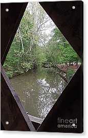 Acrylic Print featuring the photograph Peering Out by Renee Trenholm