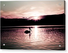 Acrylic Print featuring the photograph Pelican At Sunset. by Carole Hinding
