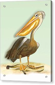 Acrylic Print featuring the painting Pelican Bill by Anne Beverley-Stamps