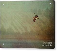 Pelican Acrylic Print by Billie-Jo Miller