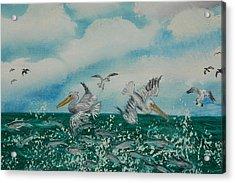 Pelican Feast Acrylic Print by Katheryn Napier