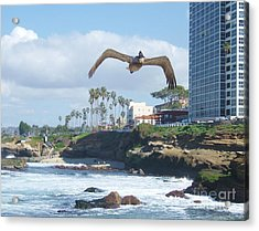Acrylic Print featuring the photograph Pelican Flight by Jasna Gopic