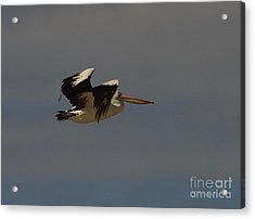 Acrylic Print featuring the photograph Pelican In Flight 3 by Blair Stuart