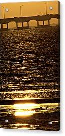 Pelican In Flight Golden Sun Acrylic Print by John Wright