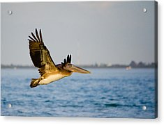 Pelican Acrylic Print by Mike Rivera